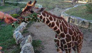 Why Wichita Zoo