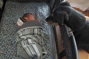 The Day I Knew the Dog Had to Go | Wichita Moms Blog