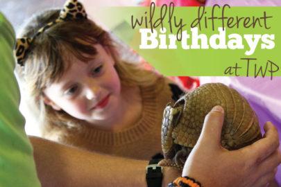 Wichita Birthday Party