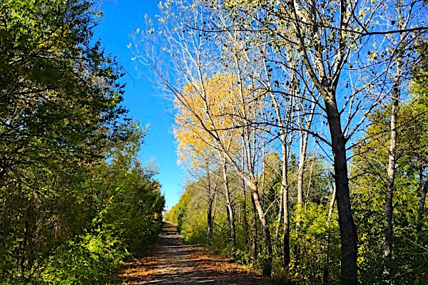 Fall Leaves Redbud Trail