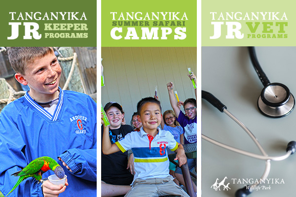 Tanganyika Camp 2020