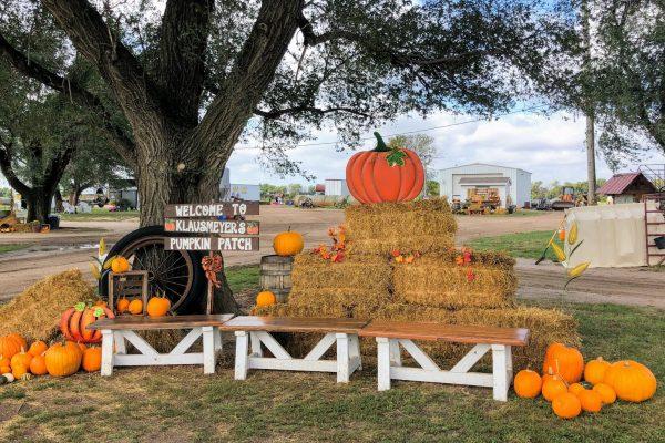 Pumpkin patches Klausmeyer