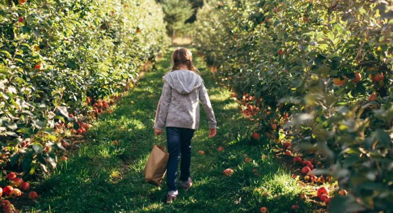 Where to Go Apple & Peach Picking in Wichita