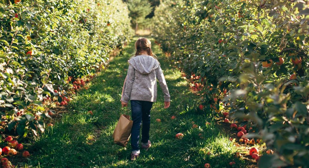 Apple Picking Around Wichita