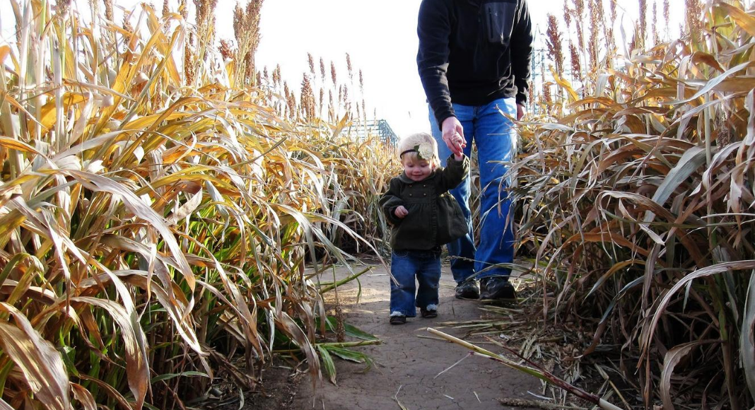 little girl in corn mazes in Wichita