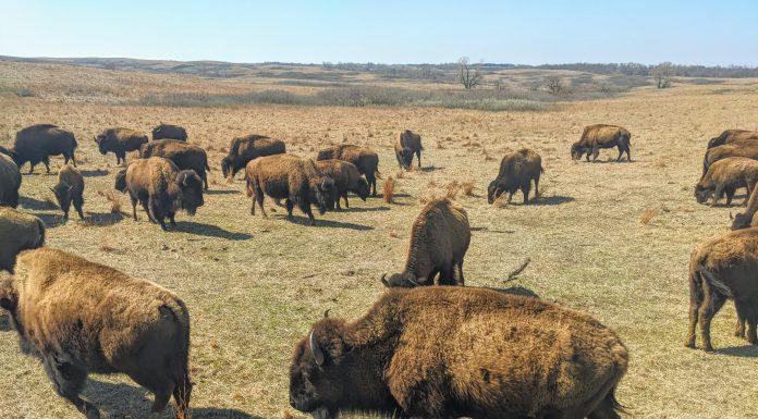 Maxwell Wildlife Refuge Kansas Prairie