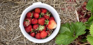 Where to Pick Berries in Wichita