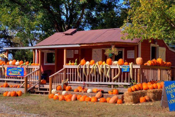 Meadowlark Farm Pumpkins
